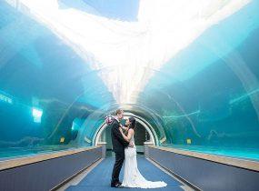 Pittsburgh Zoo & PPG Aquarium - Pittsburgh Wedding Venue & Burgh Brides Vendor Guide Member